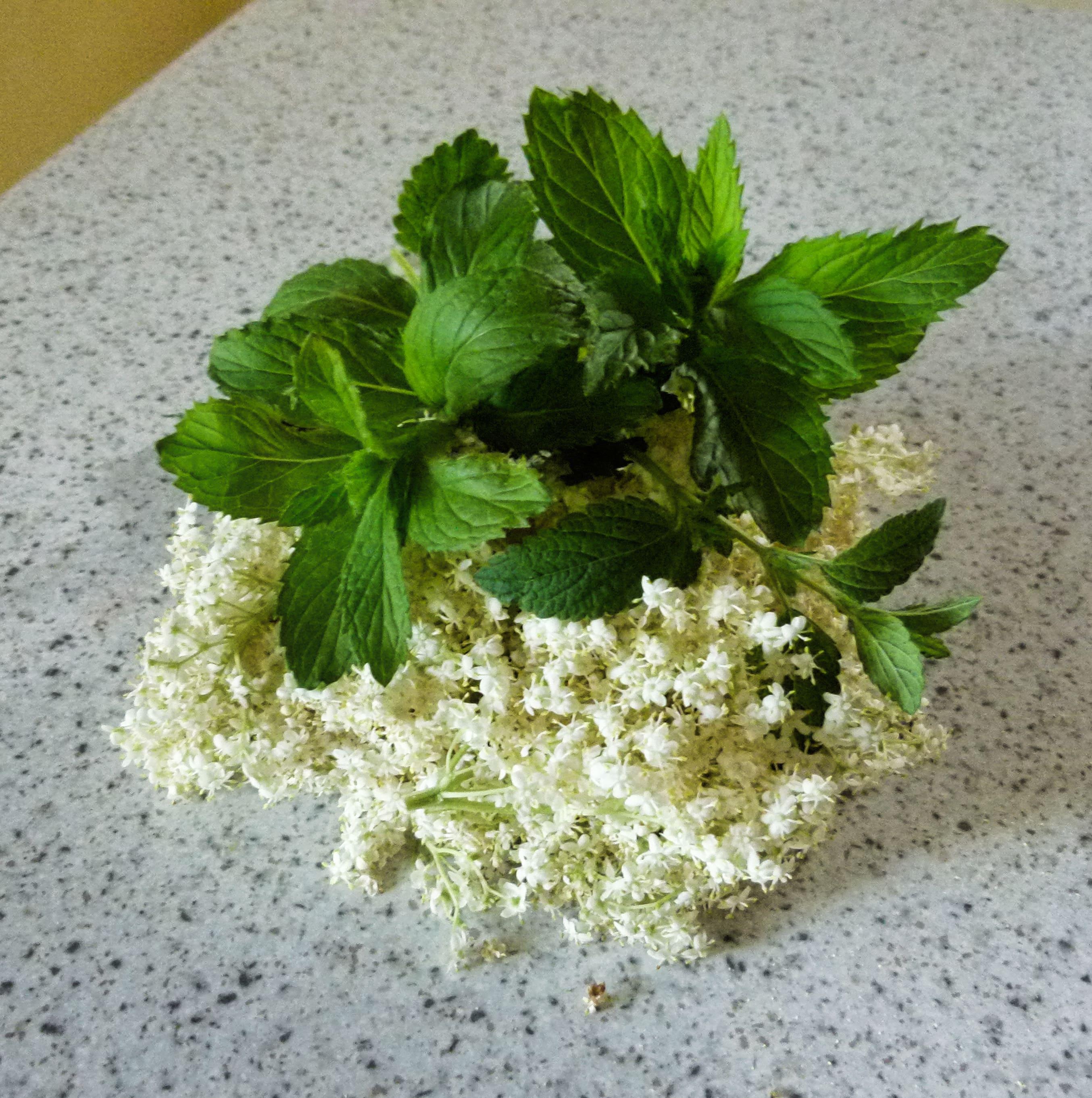 Holunderblüten und frische Zitronenmelisse